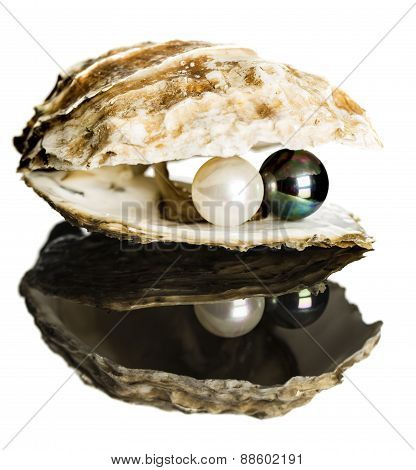 Oyster With Black And White Pearls