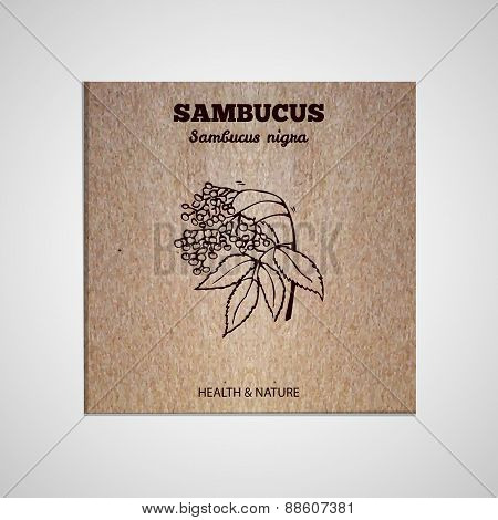 Herbs and Spices Collection - Sambucus