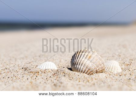 Seashell Baltic Sea