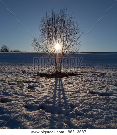 he tree stands in the middle of the field with melting snow on the background of the setting sun