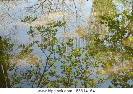 The Branches Of The Trees Reflected In A Puddle