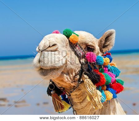 Camel head at Egypt beach. On sea background.