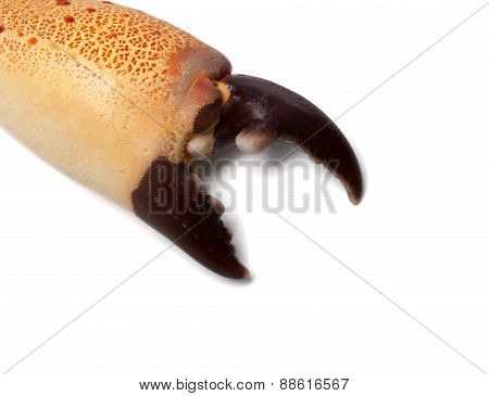 Boiled Claw Crab At Corner With Copy Space