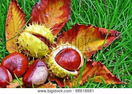Chestnuts In The Grass