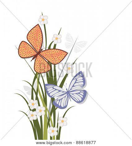 Summer flowers butterflies and grasses