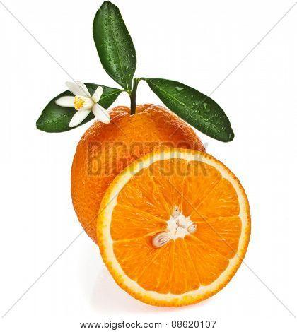 one citrus orange with slice close up isolated on white background