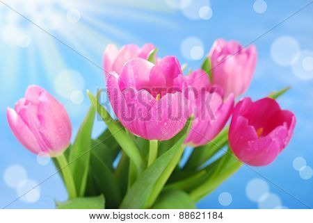 Bunch Of Pink Tulips Against Blue Sky