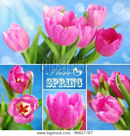 Collage With Pink Tulips And Text