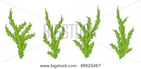 Summer green plants, bushes vector illustration set.