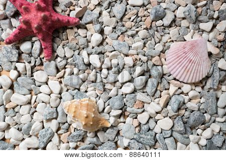 Seashore Covered By Colorful Pebbles, Seashells And Starfishes