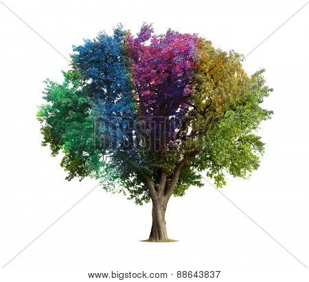 Rainbow tree isolated on white