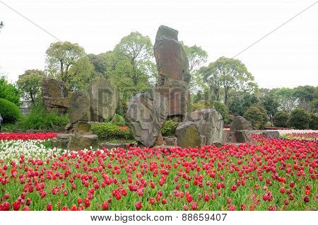 Rocks and tulips