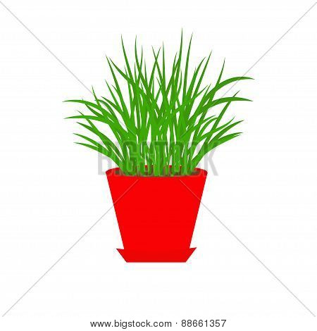 Grass In Red Flower Pot Growing Icon Isolated White Background Flat Design