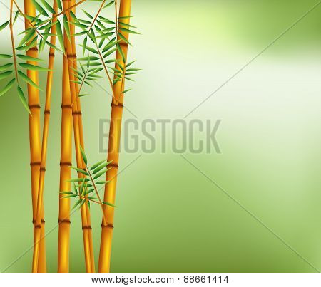 bamboo on old grunge green