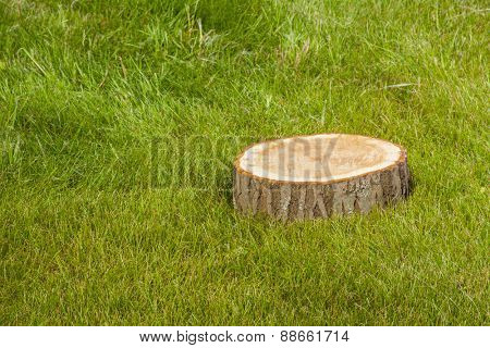 Tree stump on green grass