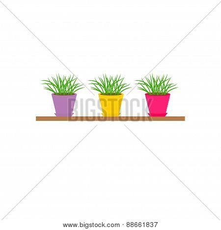 Three Colorful Pots With Growing Grass On Shelf Icon Set Isolated White Background Flat Design