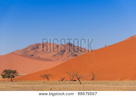 Sand Dune With Dead Trees Deadvlei Namibia