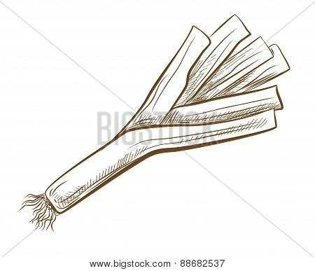 picture of ripe leek