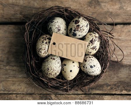 Bird eggs in nest on wooden background