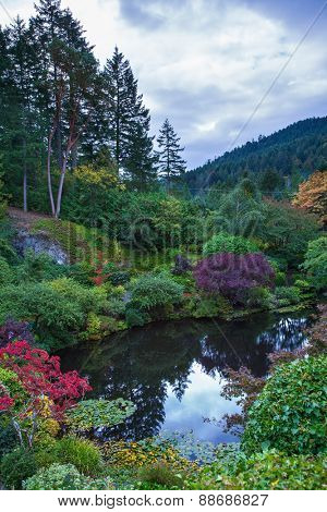 In a small pond, overgrown with lilies, reflected sky. Delightful landscaped and floral park Butchart Gardens on Vancouver Island