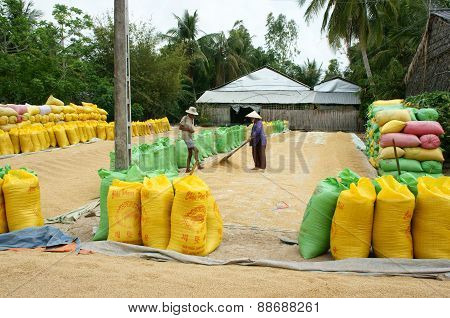 Asia Farmer, Dry Rice, Paddy Bag, Storage