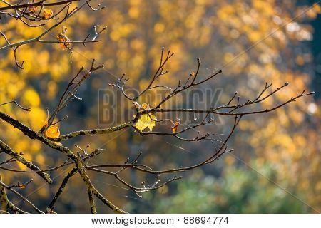 an autumn leaf on a tree