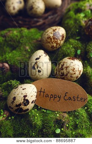 Bird eggs  with tag on green grass background