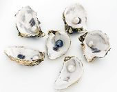 foto of oyster shell  - Oyster with black pearl surrounded by oysters with white pearls - JPG