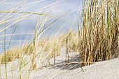 picture of dune grass  - Close shot of dune grass in sand on the coast of the Baltic Sea - JPG