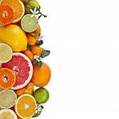 foto of orange-tree  - Beautiful citrus fruits of  lemon - JPG