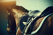 foto of girth  - Saddle with stirrups on a back of a sport horse