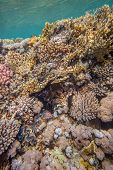 image of coral reefs  - Underwater landscape - JPG