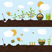 stock photo of carrot  - Vector garden illustration in flat style - JPG