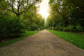 stock photo of vivacious  - walkway in a beautiful Park - JPG