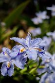 stock photo of transverse  - The spring sun open orchid material features - JPG
