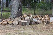 image of lumber  - Woodpile of oak lumber cuttings under oak tree on farm - JPG