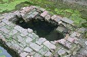 foto of green algae  - Green algae are around of ancient well made of bricks - JPG