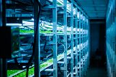 stock photo of hydroponics  - Plants are cultivated in hydroponic system - JPG
