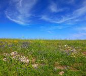 foto of golan-heights  -  Picturesque carpet of spring flowers and fresh grass - JPG