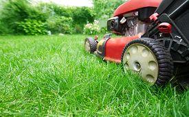 image of grass-cutter  - Lawn mower cutting green grass in backyard - JPG