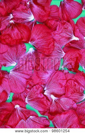 Red Hollyhock Flower Macro Texture Background