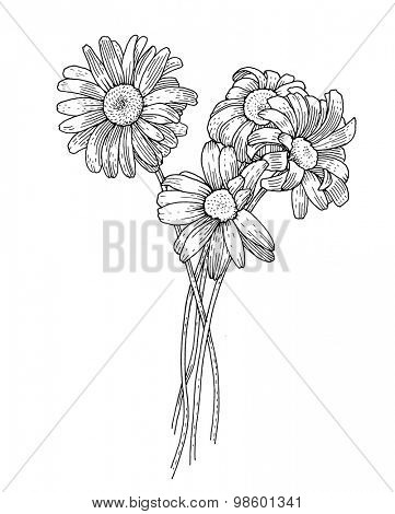 Sprig of blooming chrysanthemum, black and white graphics