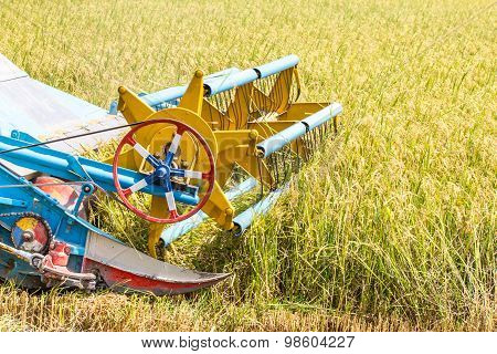 Harvesters Are Harvesting Rice In With Chopping Blade