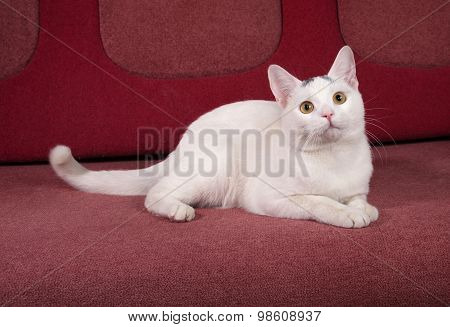White Cat With Gray Spots Lies On Couch