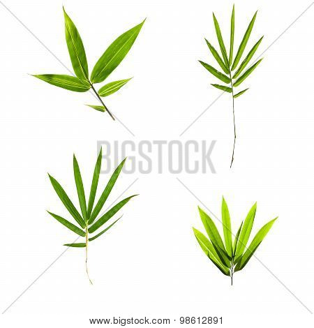 Collection Of Bamboo Leaves Isolated On White Background
