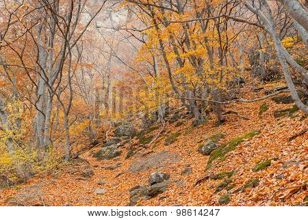 Mountain forest at fall season