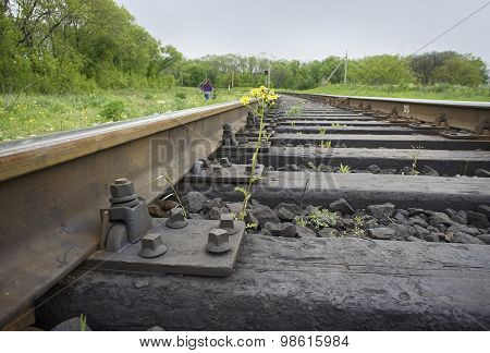 Flower Sprouting Between Railway Sleepers
