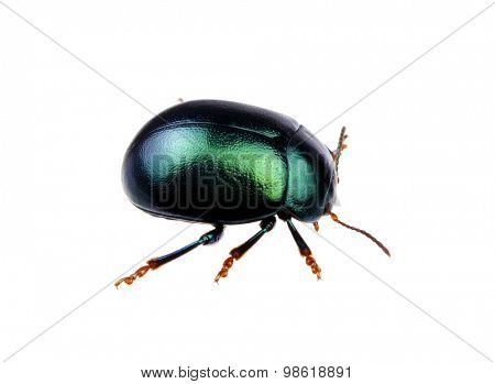 Green beetle isolated on white background