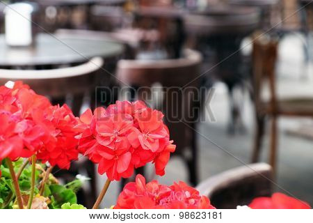 Flowers on Vintage old fashioned cafe background, outdoors