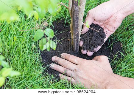 New Life For Plants A Tree